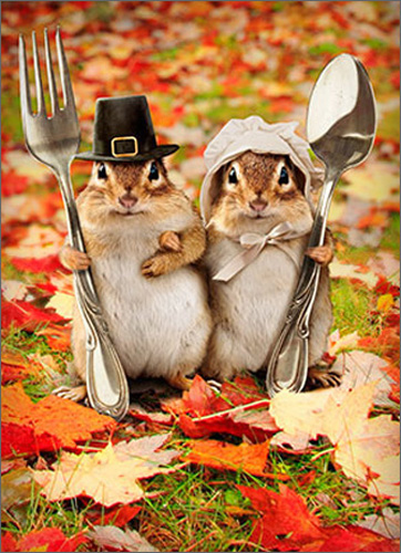 Chipmunk Couple Funny Humorous Thanksgiving Card - Greeting Card by