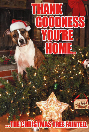 Cute Dog Memes Wallpaper Tree Fainted Dog Box Of 12 Funny Christmas Cards By Nobleworks