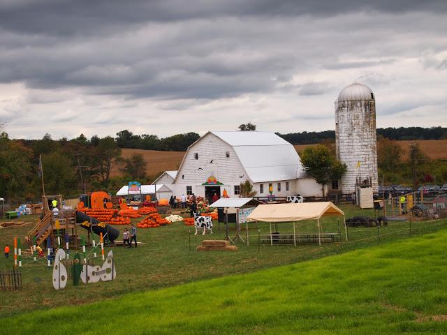 amerykańska kultura życia to jeżdżenie na farmy typu pick your own