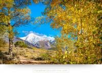 colorado wall art of aspen trees on poncha pass - Paradise ...