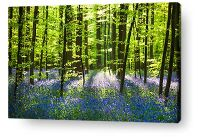 PARADISE CANVAS PRINTS - Bring paradise into your home!