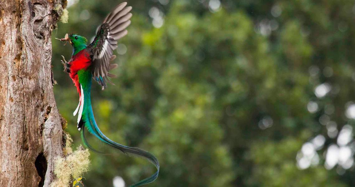 Exotic Animal Wallpaper Paraiso Quetzal Lodge Home