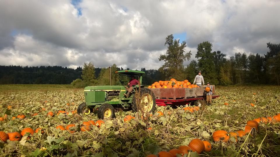 Fall Pumpkin Patch Wallpaper 10 Terrific Pumpkin Patches Around The South Sound And