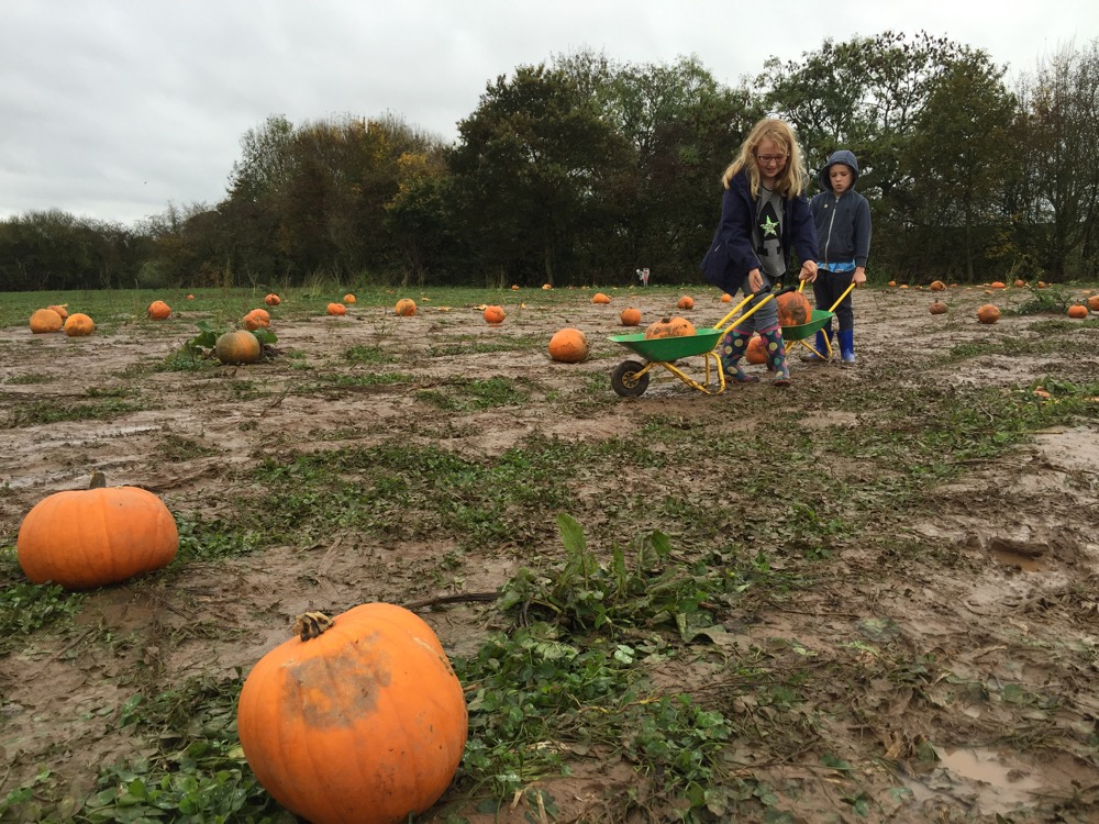 A New Little Legacy: Pumpkin Picking in Nottingham