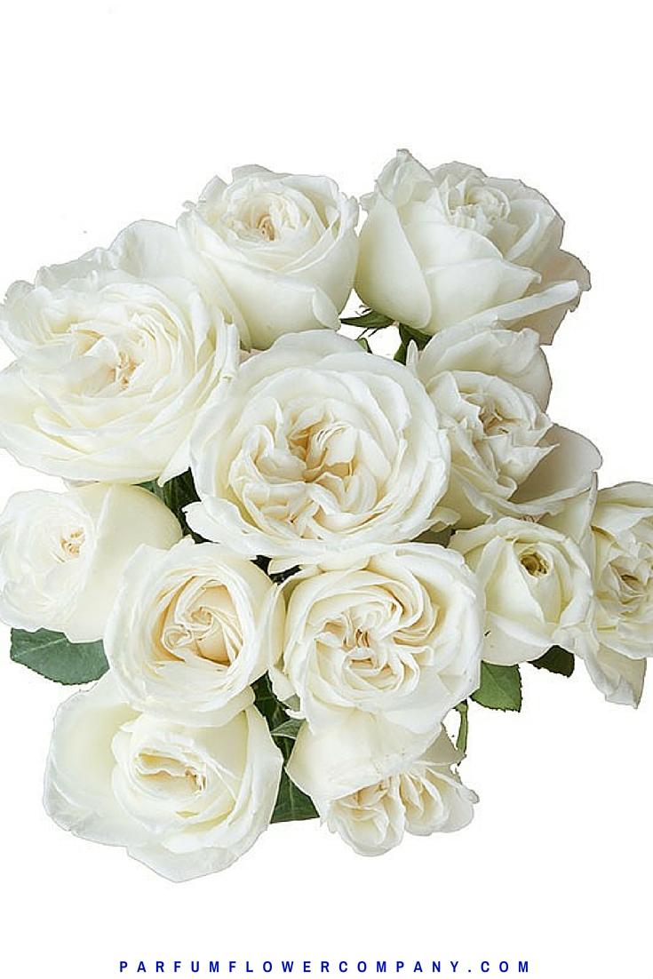 Rose White Perfumella Jeanne Moreau