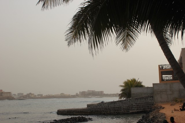 paysage palmier ngor