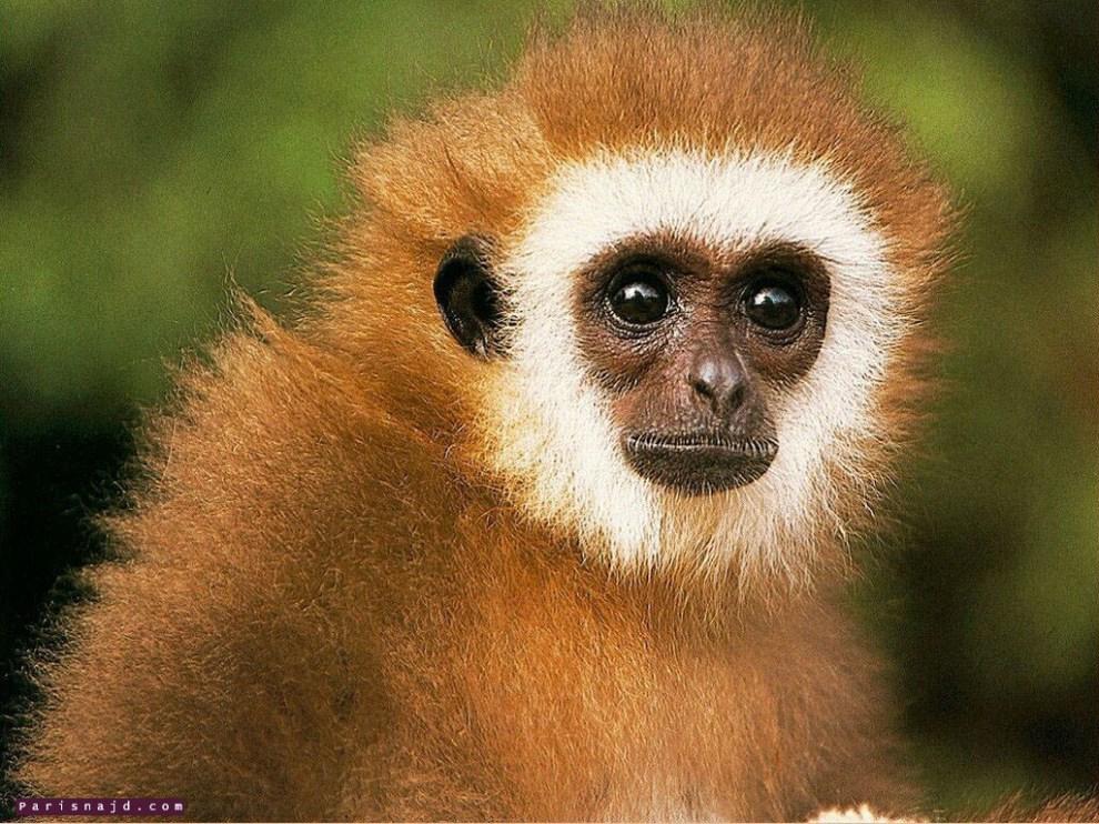 صور حيوانات روعة 2016 ، صور حيوانات مميزة 2016 ، حيوانات جديدة روعة monkey_004.jpg
