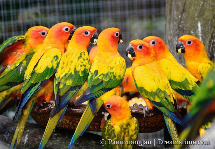 Cute Parakeet Wallpaper Position Keeping And Breeding Parrots World Parrot Trust