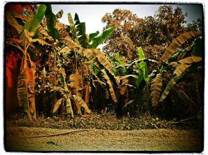 La jungle d'Or | kilomètres 17 | Cambodge