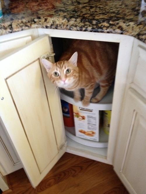 Les 22 phrases que l 39 on dit sans arr t notre chat - Comment empecher un chat de gratter a la porte ...