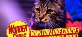 Vidéo. Winston, le chat coach en séduction