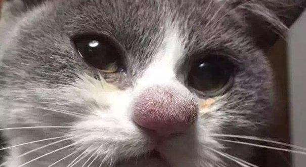 Ces chats ne joueront plus jamais avec des abeilles, aïe !