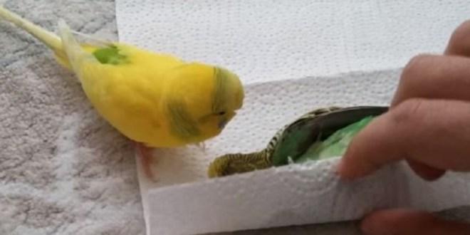 Ce petit oiseau découvre son ami étendu sur le sol, ce qu'il fait par la suite est déchirant !