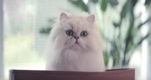 Vidéo. Le chat de la publicité GOURMET nous donne ses conseils d'acteur