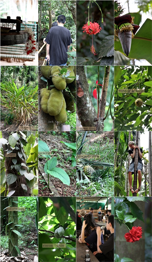 Sahakari Spice Farms Goa