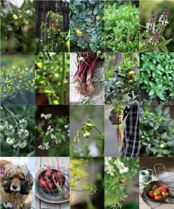 herbs veggies fruits