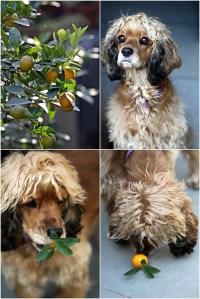 Kumquats and Coco