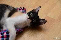 Un gatto in casa: Di cosa ha bisogno e che senso hanno per ...