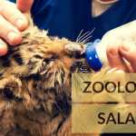 Zoologist Salary, Job Description, School and Education