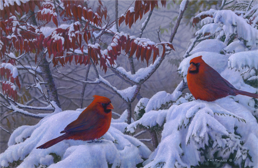 Birch Tree Fall Wallpaper Close Up Return Of Winter Cardinals In Snow Reproduction Pat