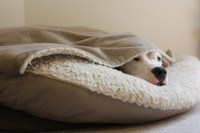 Dog Beds: Oh Lucky Dogs!