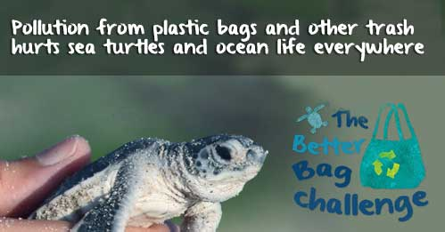 World Oceans Day is coming!