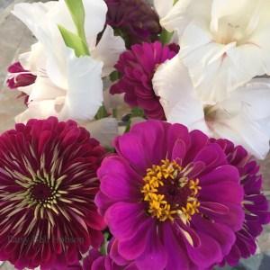 White Gladioli and purple Zinnias