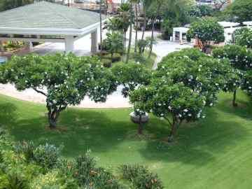 Wailea Lanai View 3