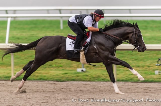 Animated Running Horse Wallpaper Honor Code Wicked Strong Return In Gulfstream Park