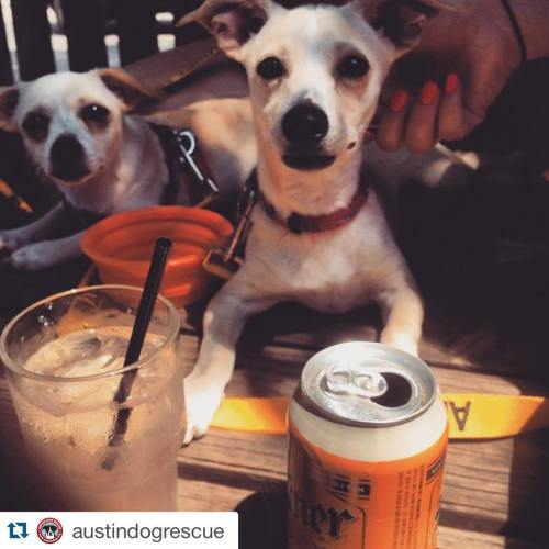 Medium Of Can Dogs Drink Beer