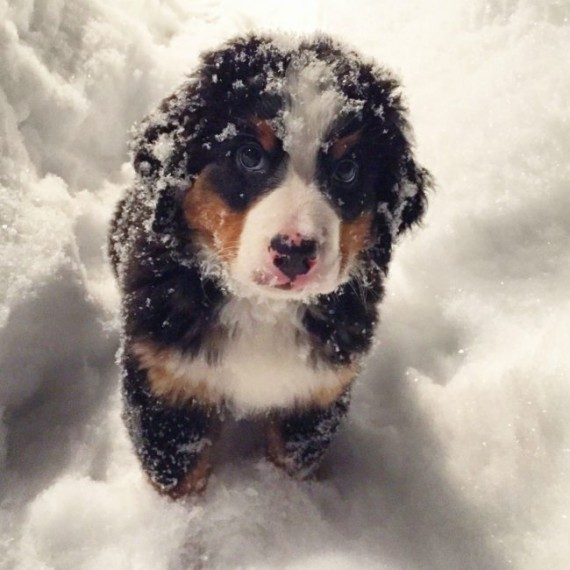 Cute Baby Face Wallpaper These 24 Pets Freaked Out When They Saw Snow For The First