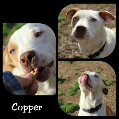 Copper - ADOPTED!