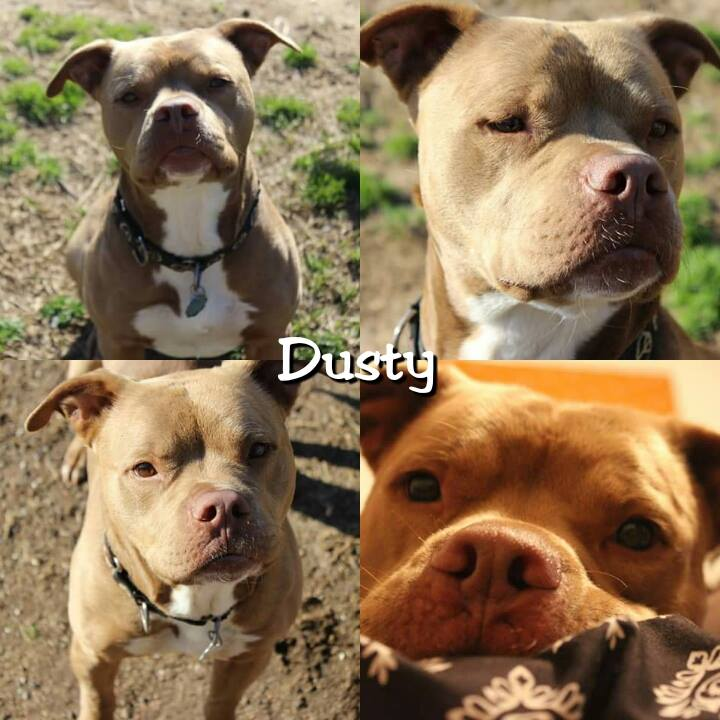 Dusty - ADOPTED!