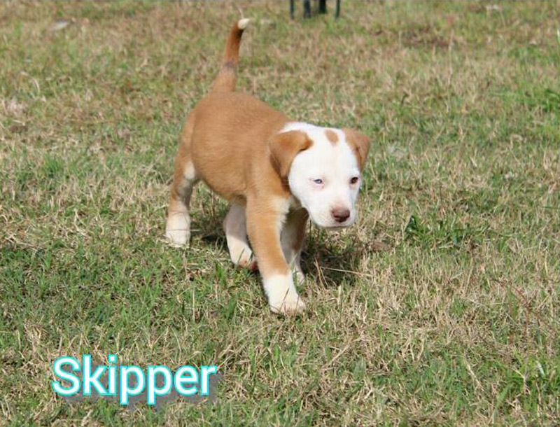 Adopted! Skipper