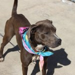 Izzy - ADOPTED!
