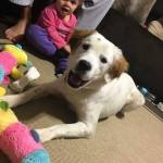 Cassidy - ADOPTED!