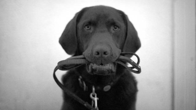 dog and leash