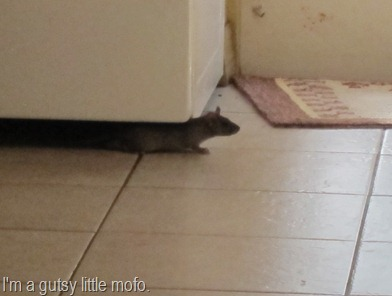 mouse in the house 004