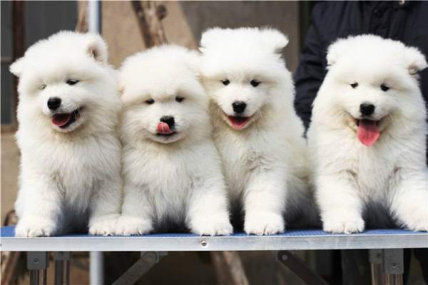 Cute Word Wallpaper The Cutest Puppy Pictures Ever