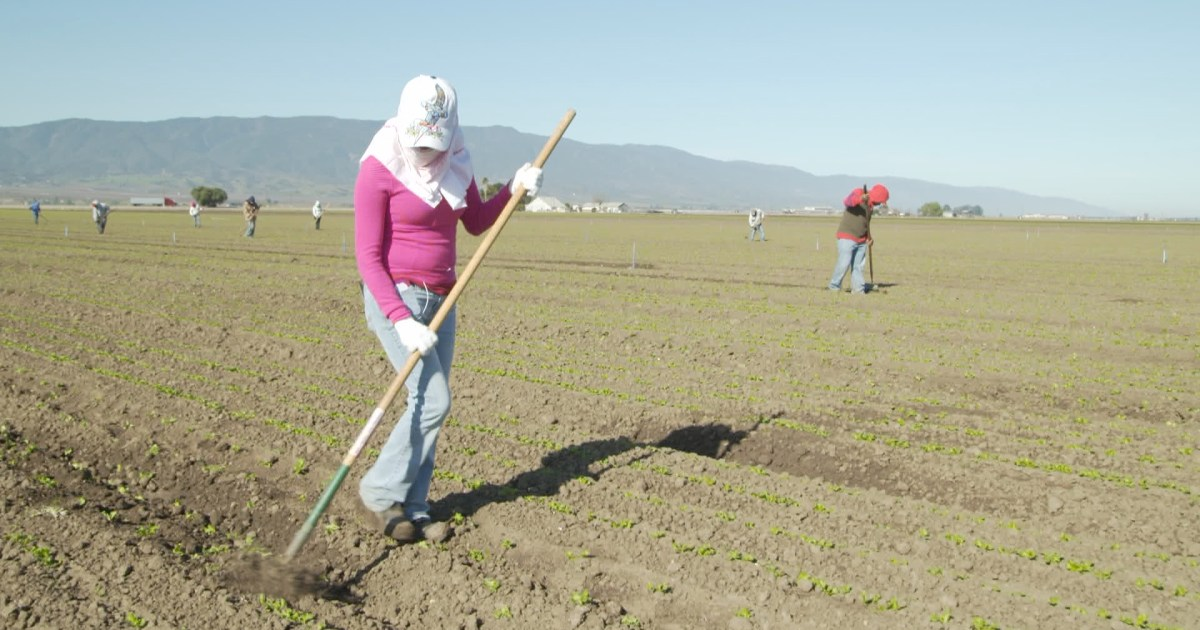 Female Farm Workers Awarded $17 Million in Florida Abuse