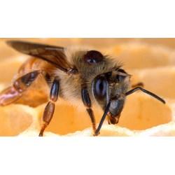 Small Crop Of Do Bees Sleep