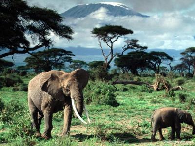PC Wallpapers – Free Wallpaper, Desktop wallpaper » Blog Archive » Elephant in the jungle
