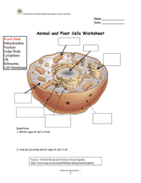 Animal And Plant Cells Worksheet Answers - Fill Online ...