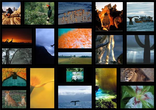 microsoft collage