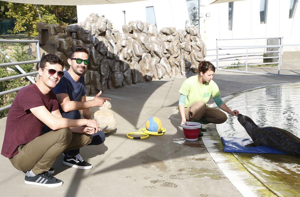 A Pamkutyás srácok hozták Pécsre az új fókalányt!