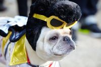 Fun Halloween Costume Ideas for Your Pup! - PEDIGREE ...