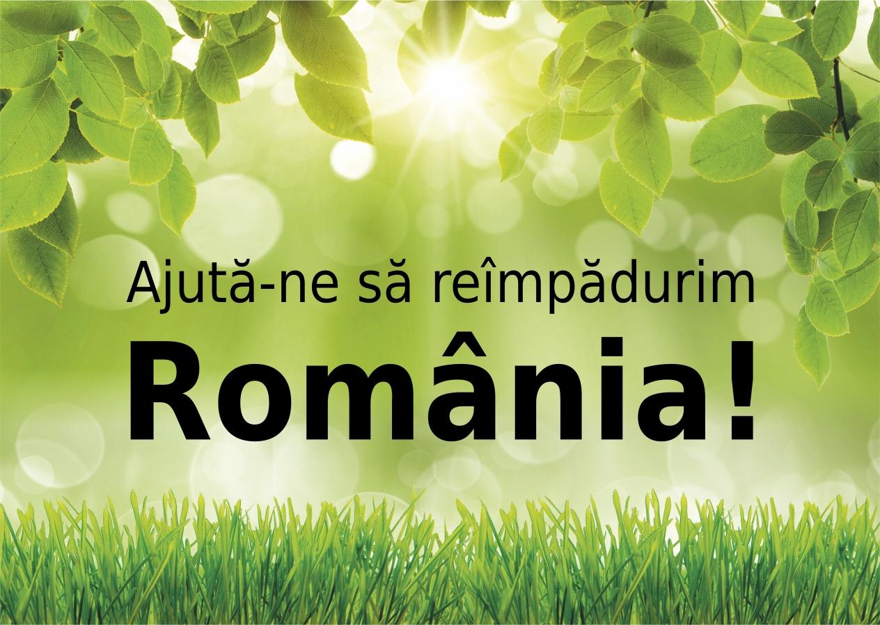Sursa foto: plantamfaptebune.ro