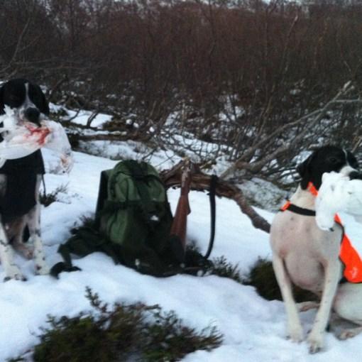 Pellarskogens Kon og Pointnics Point