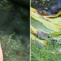 Sahara Ray y Justin Bieber desnudos en Hawaii