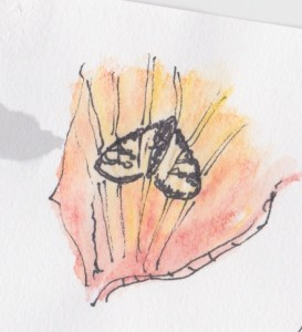 Northland moth
